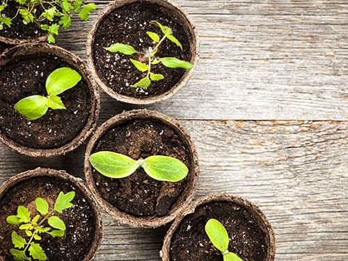 Грунт для садоводства